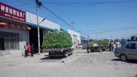 Зеленый чеснокперевозитсяпосле сбора урожая