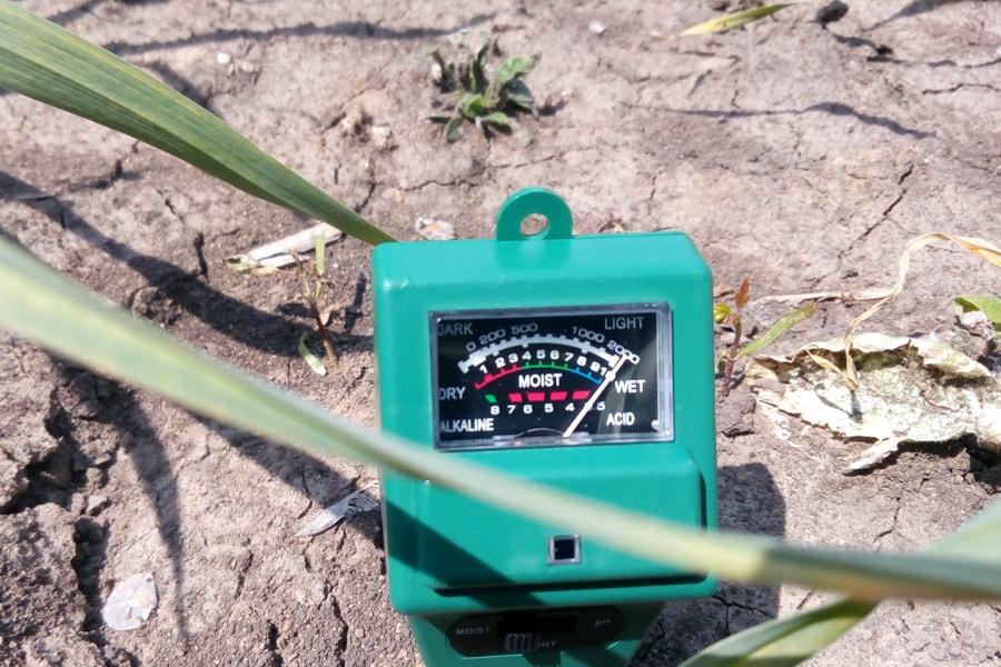 проверка уровня влажности почвы на поле чеснока прибором на поле компании УкрАп (UkrUP)