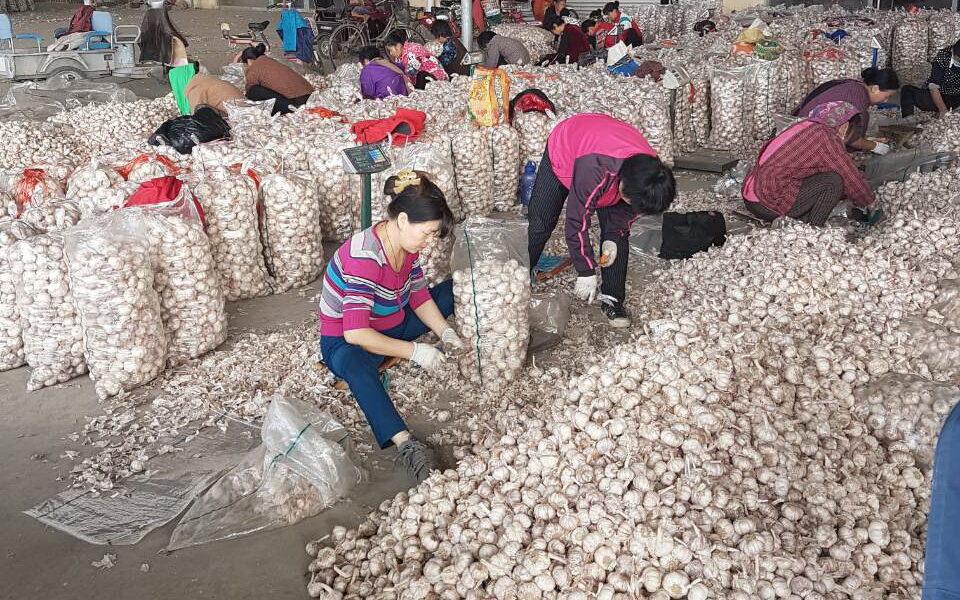 рынок чеснока в Китае, провинция Шандунь, г. Цзинин